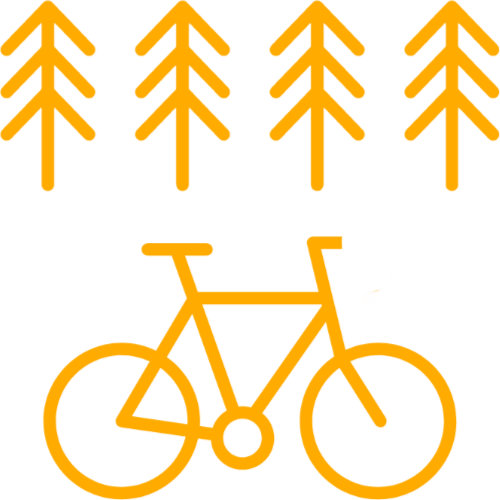 Bicycle tours through the woods